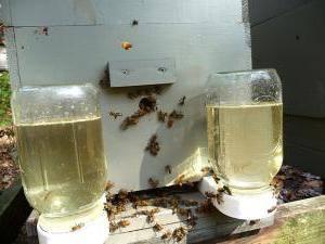 Подкормка пчел. Как кормить пчел?
