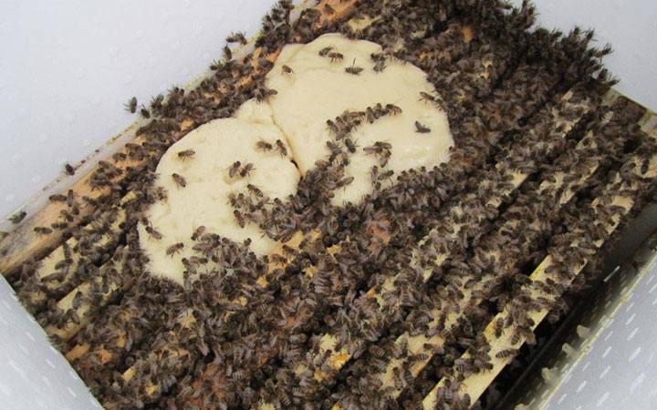 Кормление пчел. Чем кормят пчел ?