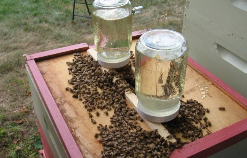 32311 Кормление пчел. Чем кормят пчел ?