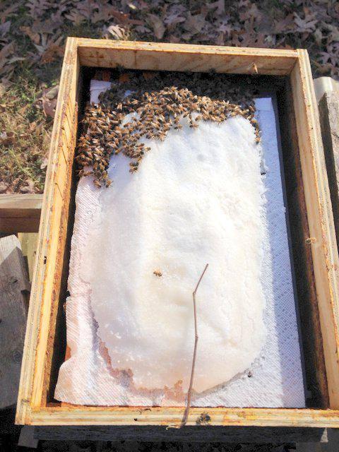 Подкормка пчел. О корме для пчел