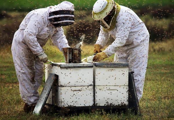 32316 Подкормка пчел. О корме для пчел