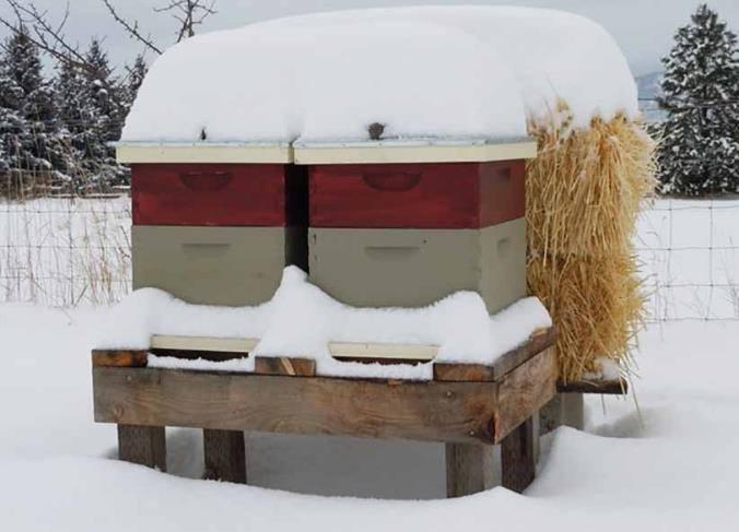 Вывод пчел из зимовки: меры для слабых пчелиных семей