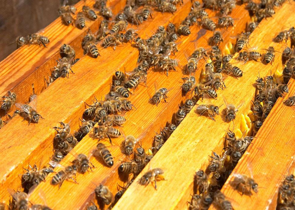 32344 Вывод из зимовки и проблемы в развитии пчелиных семей в двух царгах