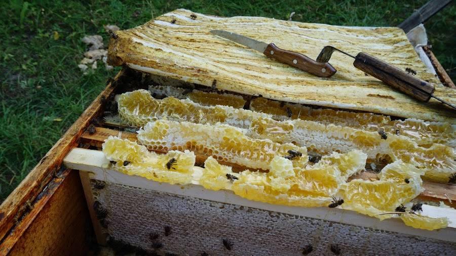 Вывод из зимовки и проблемы в развитии пчелиных семей в двух царгах