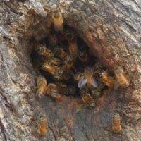 32360 Вывод из зимовки и проблемы в развитии пчелиных семей в одной царге