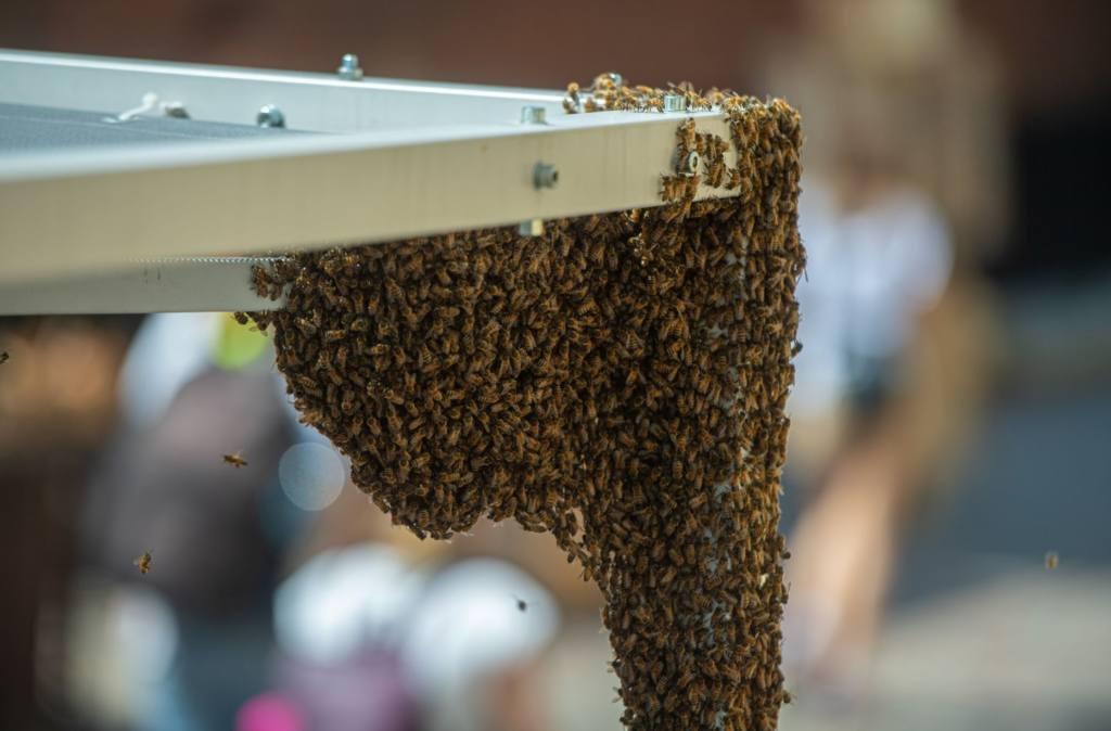 Вывод из зимовки и проблемы в развитии пчелиных семей в одной царге