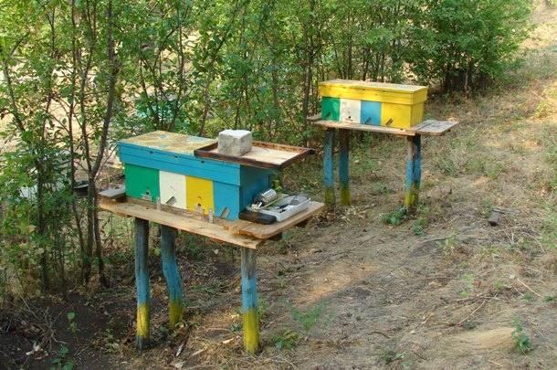 Подкормка нуклеуса или полноценной пчелосемьи
