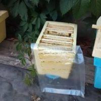 32367 Подкормка нуклеуса или полноценной пчелосемьи