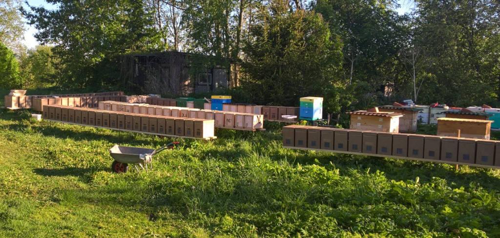Подкормка пчелопакетов на пластиковых сотах (HSC)