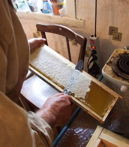 Откачка меда с помощью медогонки