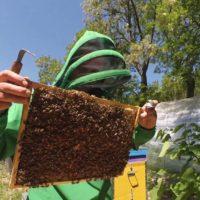 32409 Осмотр пчелиных семей