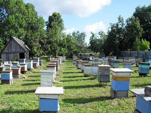 Ошибки пчеловодов, которых лучше избегать