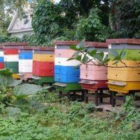 32420 Ошибки пчеловодов, которых лучше избегать
