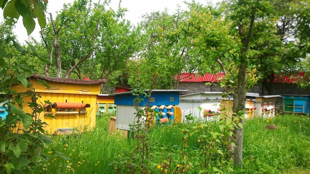 32439 Пчелопакеты