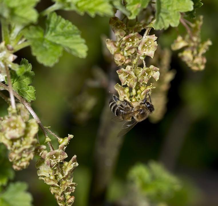 32473 Пчелы в природе и история пчеловодства