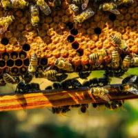 32495 Метод неограниченного расплодного гнезда или магазины для меда?