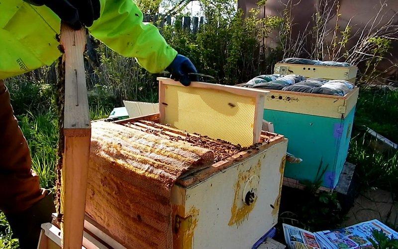 Метод неограниченного расплодного гнезда или магазины для меда?
