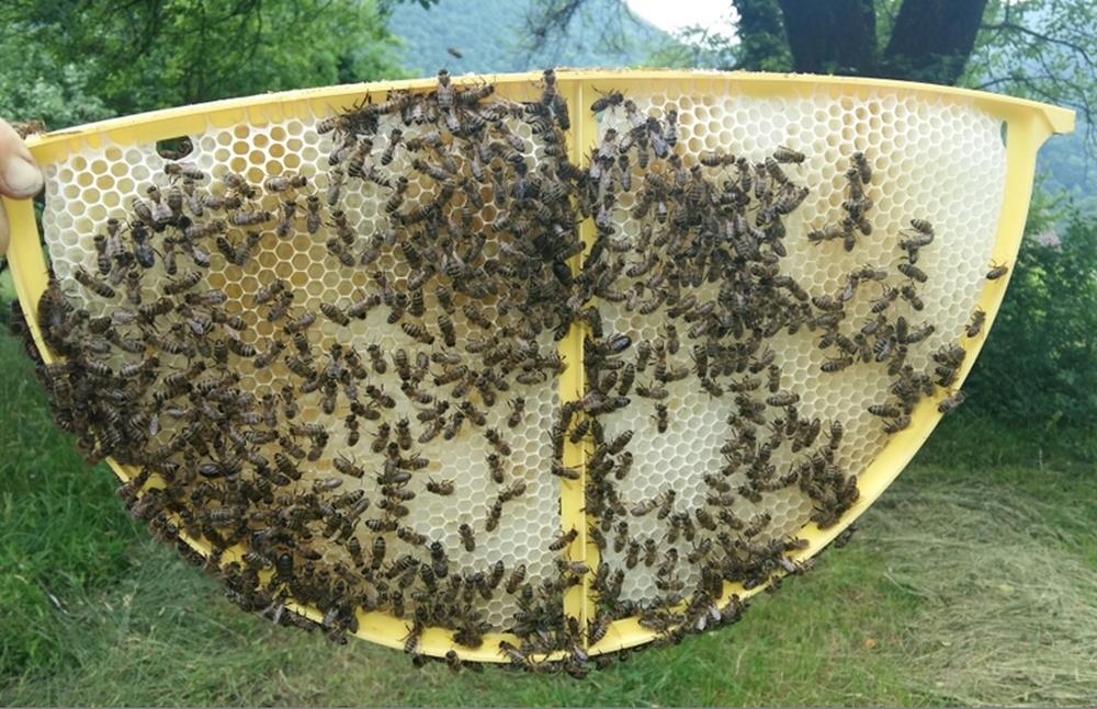 Запасы меда на зиму или взяток пчел?