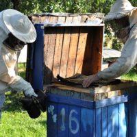 32531 Пчеловодство как бизнес и как хобби