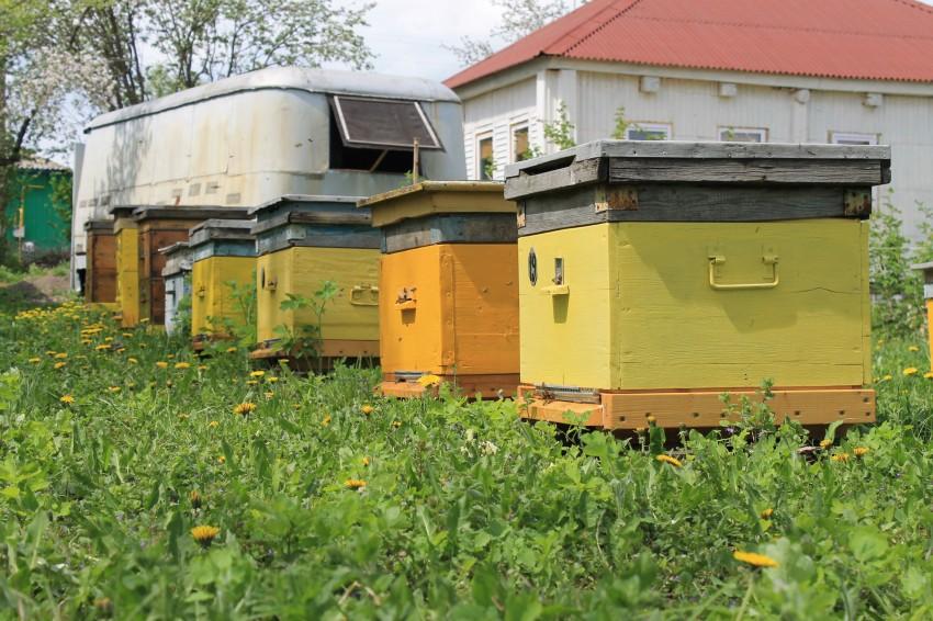 Пчеловодство как бизнес и как хобби