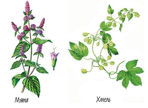 Какие растения помогают в жару