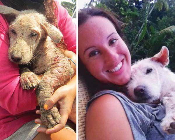 Фотографии собак, у которых появилась новая семья