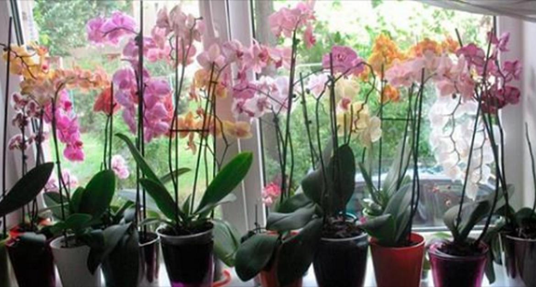 34036 7 важных секретов по уходу за орхидеями, благодаря которым она будет цвести круглый год