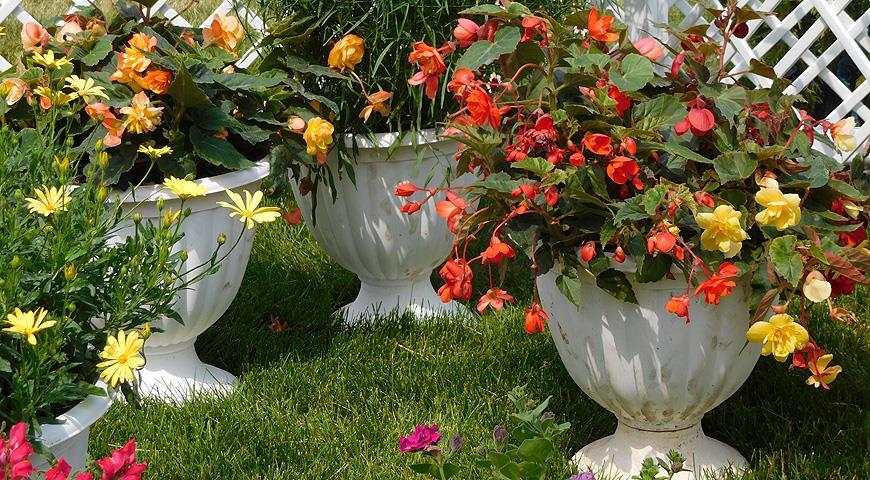 Зачем нужны контейнерные сады?