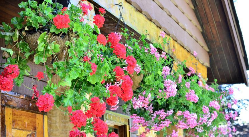 Украшаем террасу цветами