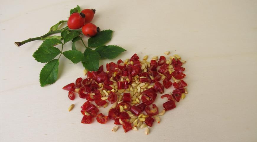 шиповник, роза, семена
