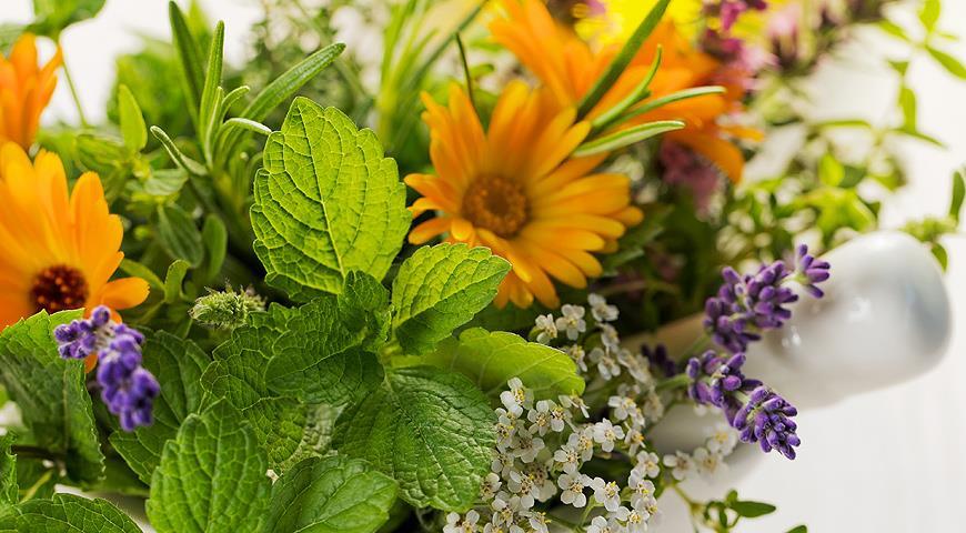 Как быстро украсить сад к празднику?