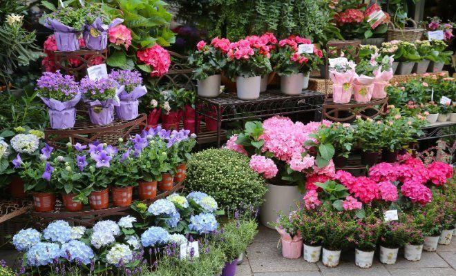 Скоро станут известны самые модные садовые растения