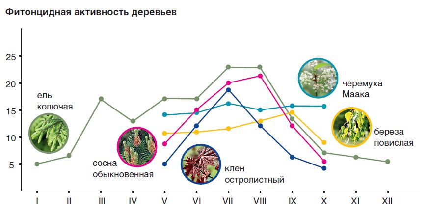 Фитонциды в саду: охотники за микробами