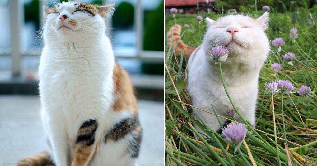 10 обязанностей любого кота