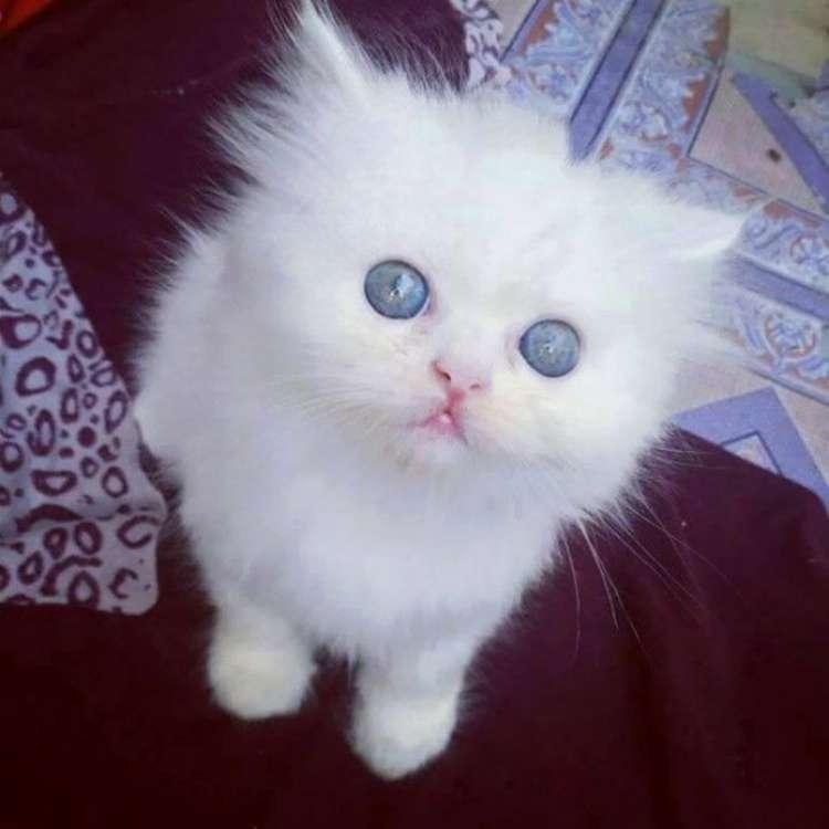 коты, котята для поднятия настроения