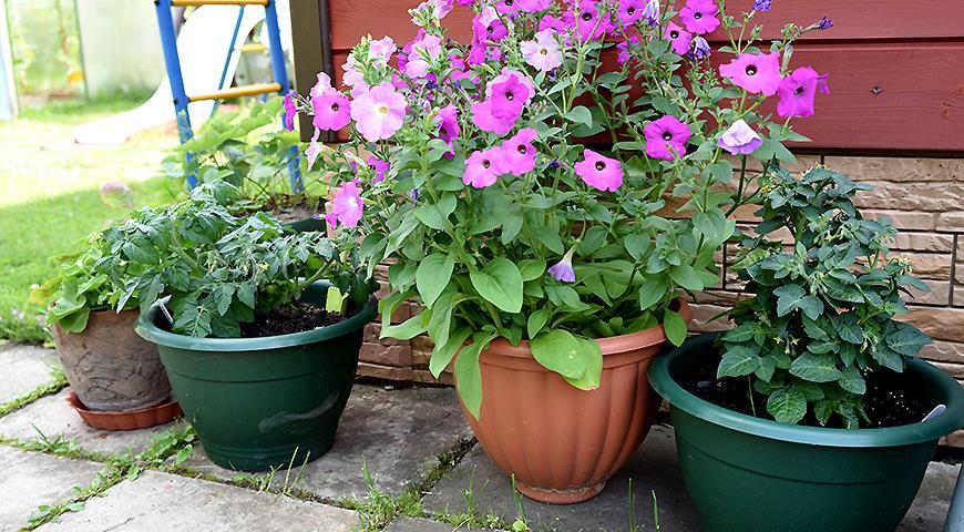 Заливает сад и огород: как спасти урожай?