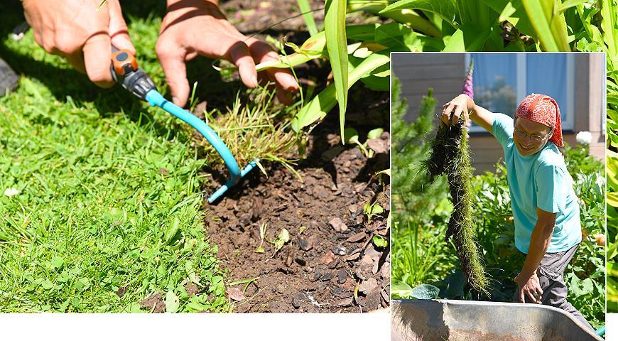 Как сформировать идеальную кромку газона с фото и видео