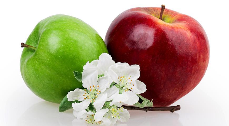 Яблоневый сад: современные технологии