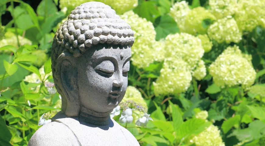 Мифы, легенды и истории о гортензиях
