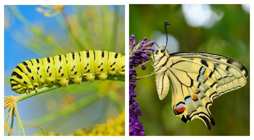 Гусеницы в огороде, виды, описание, меры борьбы