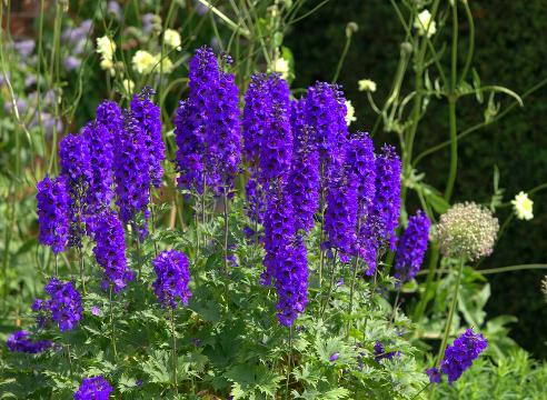 Цветник: сезонные работы в июле