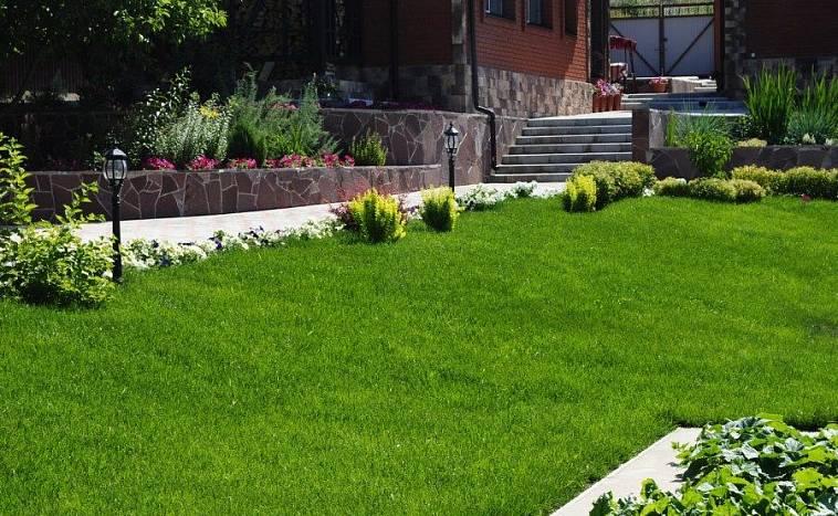 35524 Выбор правильного типа травы для вашего двора