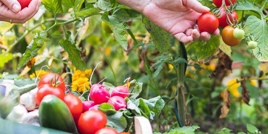 35874 Лунный посевной календарь садовода и огородника на август 2020 года