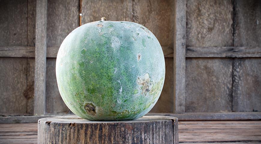 Бенинказа – восковая сладкая тыква, которая хранится 3 года!