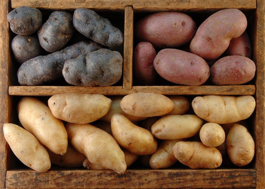 Цветной картофель: в чем его ценность?
