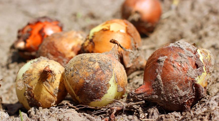 Огород: сезонные работы в августе