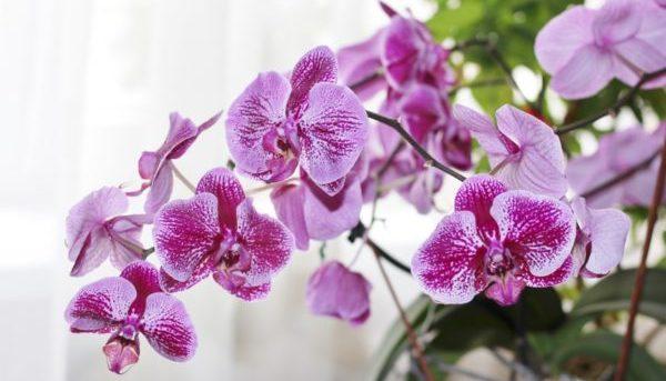 35933 Факты о разных видах орхидей