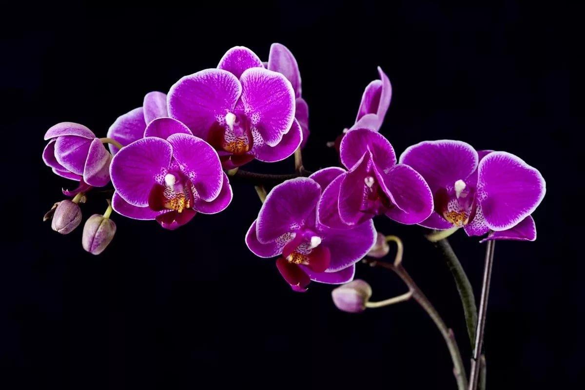 35882 Какие цветы привлекут к вам в дом роскошь и богатство