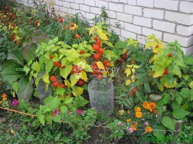 35767 Начните свой осенний калифорнийский сад в сентябре