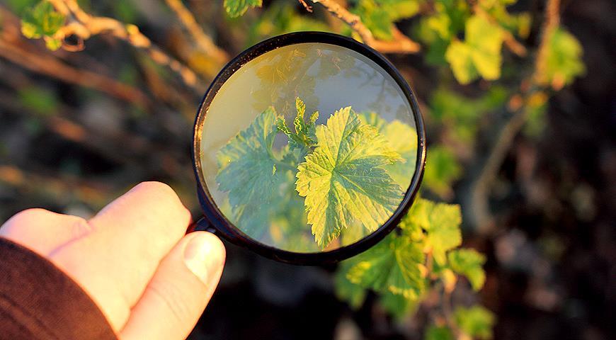 36426 Основные болезни плодового сада: краткий определитель